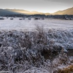 Frost - Garmisch Partenkirchen, Germany, Early December 2016